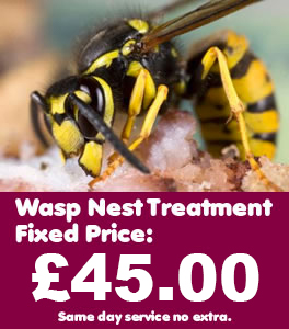 Alvechurch Wasp Control, Wasp nest treatment and removal only £45.00 no extra, 100% guarantee with no hidden extras or nasty surprises. T:0121 450 9784