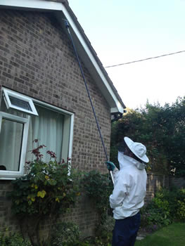 Sutton Coldfield Wasp Control, Wasp nest treatment - removal only £45.00 no extra, 100% guarantee with no hidden extras or nasty surprises. T:0121 450 9784