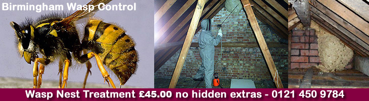 Sutton Coldfield Wasp Control, Wasp nest treatment and removal only £45.00 no extra, 100% guarantee with no hidden extras or nasty surprises. T:0121 450 9784