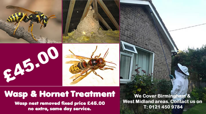 Wssp Go Birmingham wasp and hornet treatment fixed price £39.50, covering Birmingham, Wolverhampton and West Midlands. Contact us on 0121 450 9784  for more info